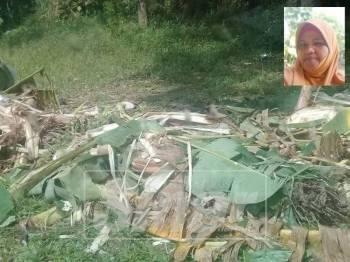 Keadaan tanaman di belakang rumah Banon (gambar kecil) yang dirosakkan gajah liar.