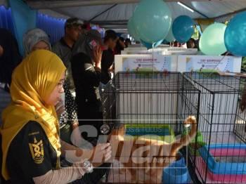 Antara kucing yang ditawarkan untuk diadopsi ketika program berkenaan.