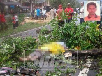 Mangsa meninggal dunia di lokasi kejadian setelah dihempap pokok ketika menunggang motosikal di Kampung Pelam, Hulu Terengganu, hari ini.