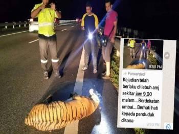Penyebaran berita palsu tentang seekor harimau dilanggar kenderaan di AMJ Umbai, yang tular sejak semalam.