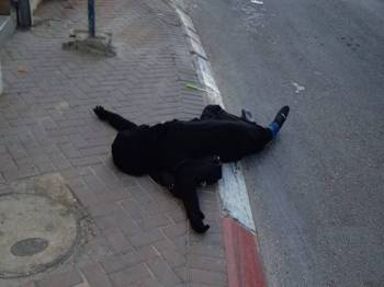 Wanita Palestin yang didakwa cuba menikan temtera Israel di pos pemeriksaan Al-Zaayim, awal hari ini.