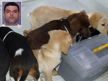 Andrew Lopez Elorez dijatuhi hukuman penjara enam tahun selepas disabit bersalah menanam beg cecair heroin ke dalam tubuh anak anjing untuk diseludup ke AS.