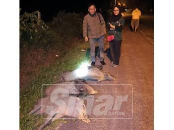 Norhizam dan Noorzakiahanum menunjukkan tiga ekor babi hutan yang berjaya ditembak.