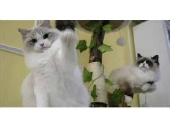 Kedua-dua anak kucing itu melepasi pemeriksaan keselamatan tanpa disedari pihak berkuasa.