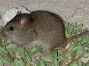 Spesies haiwan itu tidak pernah dilihat sejak 2009.