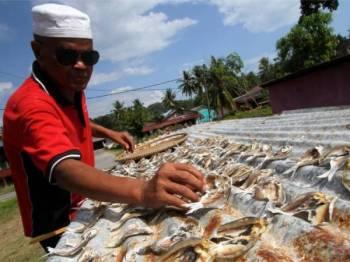 Zakaria mengambil peluang menjemur ikan gelama untuk dijadikan ikan kering di rumahnya di Pasir Panjang ketika tinjauan cuaca panas, hari ini. - Foto Bernama