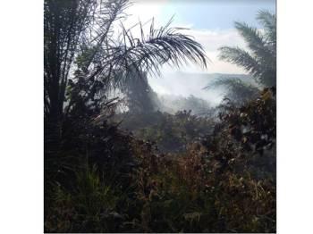 Kebakaran melibatkan ladang 4 hektar di Kluang.