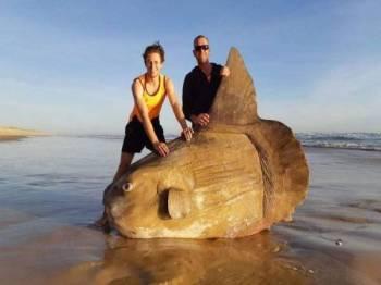 Gambar ikan matahari tular di media sosial.