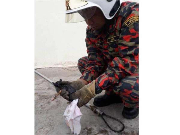 Anggota bomba menggunakan penjerut untuk menaikkan kucing tersebut.  - Foto Bomba Bukit Angin