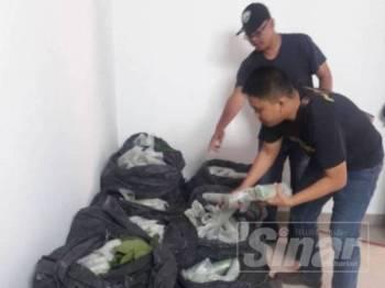Pihak polis sedang memeriksa bungkusan daun ketum yang dirampas.