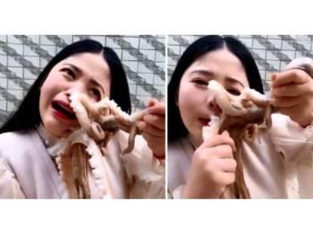 Sotong kurita menyedut kuat wajah mangsa yang ingin memakan haiwan itu hidup-hidup.