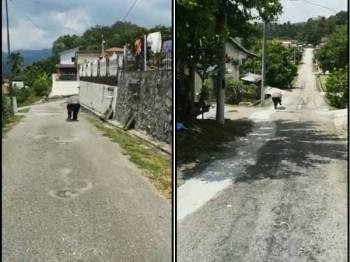 Tapir yang berkeliaran di kawasan perumahan di Pertang tengah hari kelmarin.