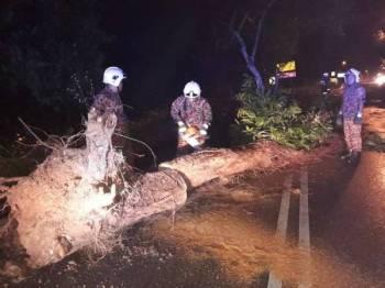 Anggota bomba memotong dan mengalihkan pokok yang tumbang sehingga menyebabkan seorang remaja cedera dalam kejadian tersebut. - FOTO IHSAN BOMBA