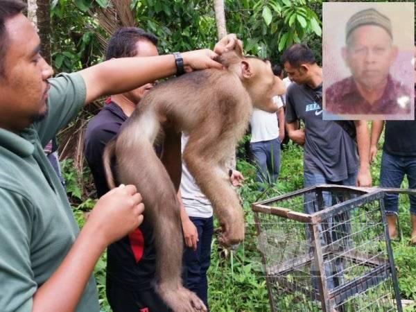 Kakitangan Perhilitan berjaya menangkap haiwan itu di lokasi sekitar jam 12 tengah hari tadi. (Gambar kecil, Ngah Muhammad).