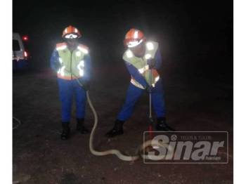 Anggota APM Segamat menangkap ular tedung selar yang menyelinap masuk di sebuah kediaman di Kampung Jawa, Segamat.