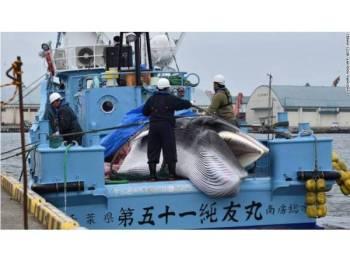 Ikan paus jenis minke yang dibawa ke pelabuhan Kushiro, Hokkaido pada Isnin.
