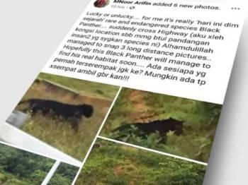 MNoor Arifin berkongsi enam keping gambar harimau kumbang di laman sosial Facebook miliknya semalam.
