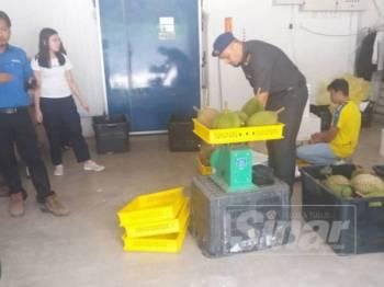 Anggota Penguatkuasa PKPDNHEP Cawangan Raub memeriksa alat timbangan yang digunakan peniaga durian ketika operasi di sekitar Raub baru-baru ini.