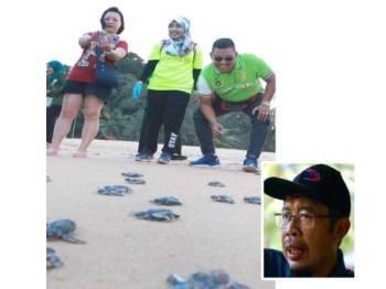 Aktiviti pelepasan penyu oleh pelbagai pihak membantu meningkatkan pendaratan reptilia itu di PKKP Cherating. (gambar kecil: Azahari)