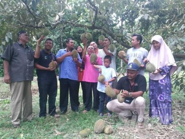 Fauzi (tiga dari kiri) melihat durian di kebun milik Kamaruddin di Kampung Pengkalan Sentul petang tadi.
