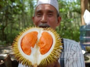 Wahab menunjukkan durian isi oren dari pokok yang ditanamnya lebih tiga dekad lalu.