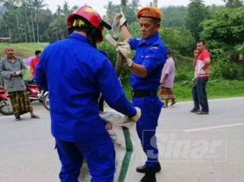 Anggota APM Jeli mengangkat tedung selar seberat 6kg di Kampung Kuala Long di sini semalam.