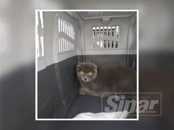 Kucing yang 'ditahan' selepas didapati dibawa masuk ke negara ini menggunakan permit import mengelirukan.