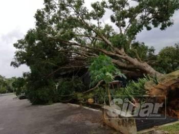 Kejadian pokok tumbang yang berlaku akibat hujan dan angin kuat semalam.