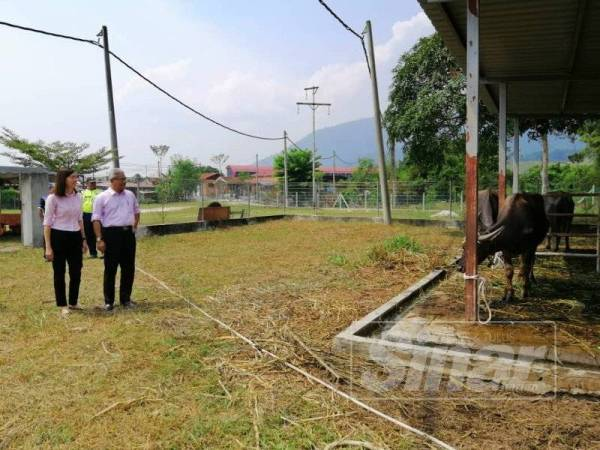 Khairul Amir dan Sandrea Ng ketika meninjau haiwan ternakan berkeliaran yang ditangkap dalam satu operasi di DUN Teja, minggu lalu.