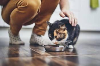BERSIFAT ihsanlah kepada haiwan tidak kiralah sama ada ia dipelihara atau tidak bertuan sekalipun. -Gambar hiasan