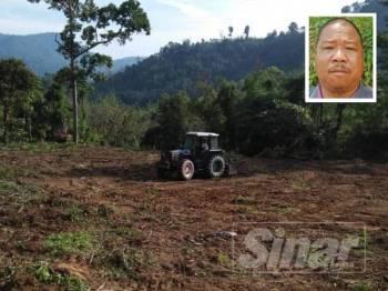 Kawasan tanaman diusahakan penduduk orang asli suku Temiar seluas lebih 1.214 hektar dimusnahkan menggunakan jengkaut. Gambar kecil, Bidi Ronggeng.