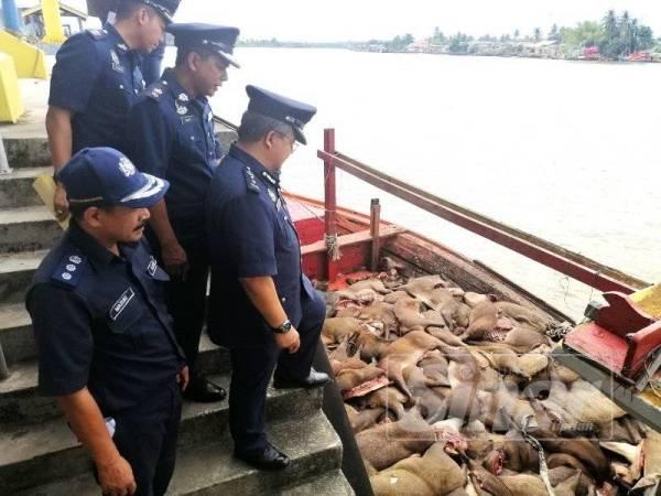 Mohd Rakbi (depan) melihat bahagian babi hutan di dalam bot ikan yang dirampas.