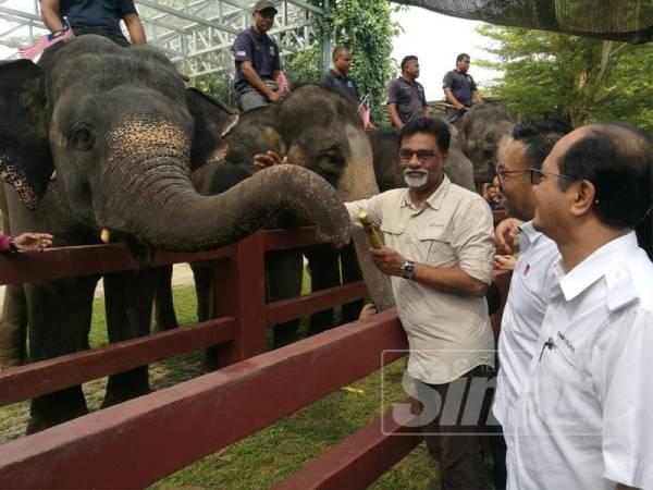 Xavier (kiri) memberi makan gajah selepas merasmikan Sambutan Hari Gajah Sedunia di Pusat Konservasi Gajah Kebangsaan Kuala Gandah di sini hari ini.
