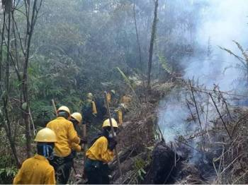 Anggota bomba dikerah memadam kebakaran hutan di daerah Labanan di Berau, Kalimantan Timur.