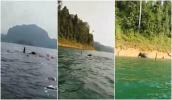 Aksi gajah berenang di Tasik Kenyir berjaya dirakam Mohd Suwardi Muhamad Azmi.