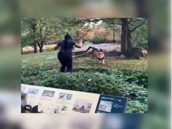 Wanita itu berdiri hanya beberapa kaki daripada haiwan pemangsa itu sambil menari dan melambaikan tangannya.