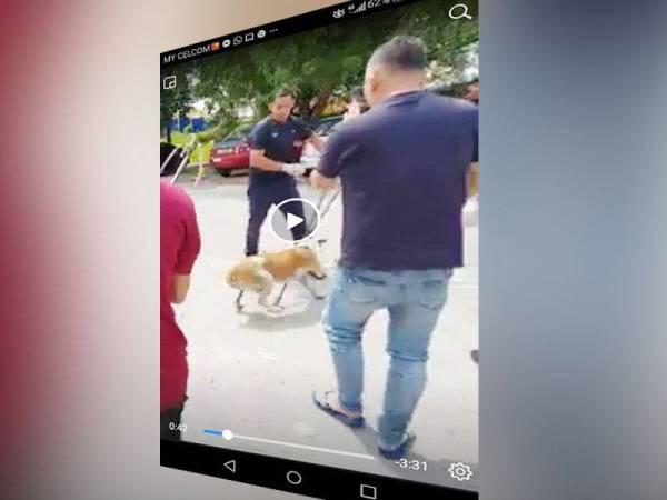 Rakaman video menunjukkan proses penangkapan anjing yang tular di media sosial.