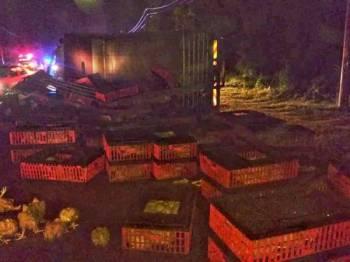 Ayam hidup bertaburan dalam nahas membabitkan lori dan sebuah kereta hingga mengorbankan seorang lelaki warga Thailand malam tadi.