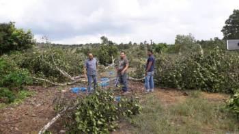 Muhammad Zakwan (tengah) bersama ADUN Muadzam Shah, Razali Kassim (kiri) yang turun padang meninjau kemusnah tanaman pokok nangka madu diusahakan peserta.