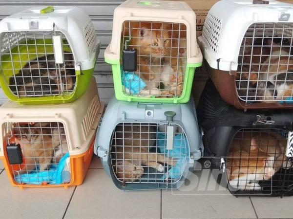 Sebahagian kucing yang sedang menunggu tuan baharu khususnya di sekitar Manjoi dan Ipoh.