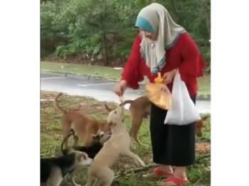 Paparan video menunjukkan seorang wanita Muslim memberi anjing jalanan makan mengundang reaksi positif daripada netizen.