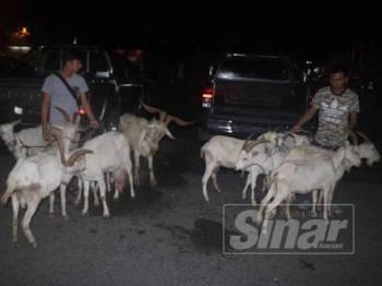 Polis merampas 10 ekor kambing daripada 52 ekor yang dicuri dan disembelih untuk dijual di Pasar Kulim.