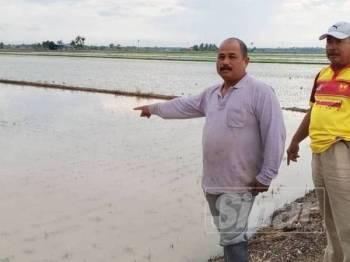 Napiyah (kanan) menunjukkan masalah pokok padi yang ditanamnya ditenggelami air.