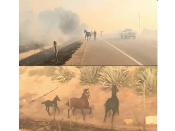 Aksi kuda menyelamatkan 'ahli keluarga' mengundang sebak dalam kalangan netizen.