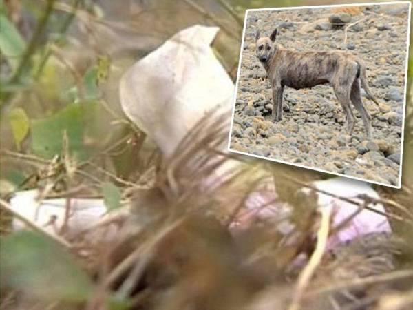 Mayat seorang bayi yang dibuang di sebuah kawasan terbiar di Kaohsiung, Taiwan menjadi habuan anjing liar. - Foto SETN/EBC