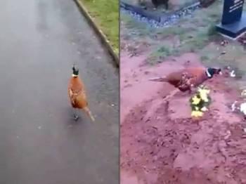 Burung menunggu dan mengiring anak arwah ke kubur ibunya. (Kanan: Burung berlegar-legar di kubur arwah sekali gus menyentuh hati lelaki tersebut.)