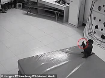 Seekor monyet di China telah dirakam melakukan aktiviti membeli-belah dalam talian.