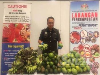 Maqis dengan kerjasama Kastam berjaya mematahkan cubaan membawa masuk tiga jenis buahan dari Myanmar tanpa sebarang dokumen sah di KLIA2 Sepang semalam.