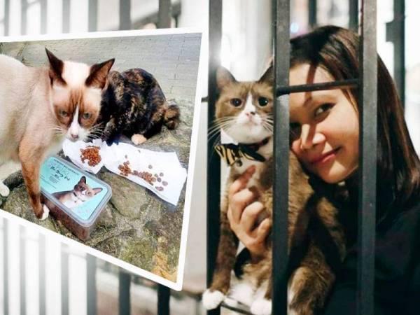 Natrah memberi bekal makanan daripada Kiki The Stray Cat kepada kucing gelandangan.