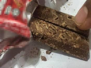 Ulat putih yang kelihatan dalam coklat itu.